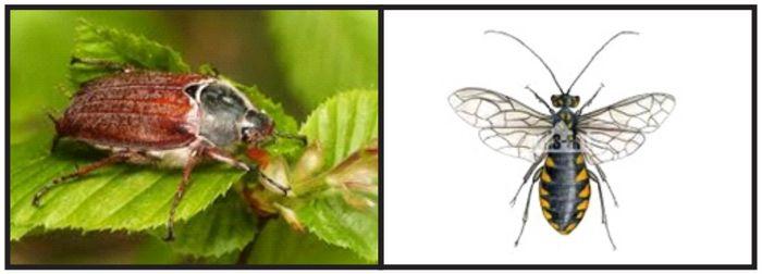 owady.jpg