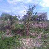 Teren wokół zbiorników wodnych w Zagórzu - stan przed realizacją inwestycji